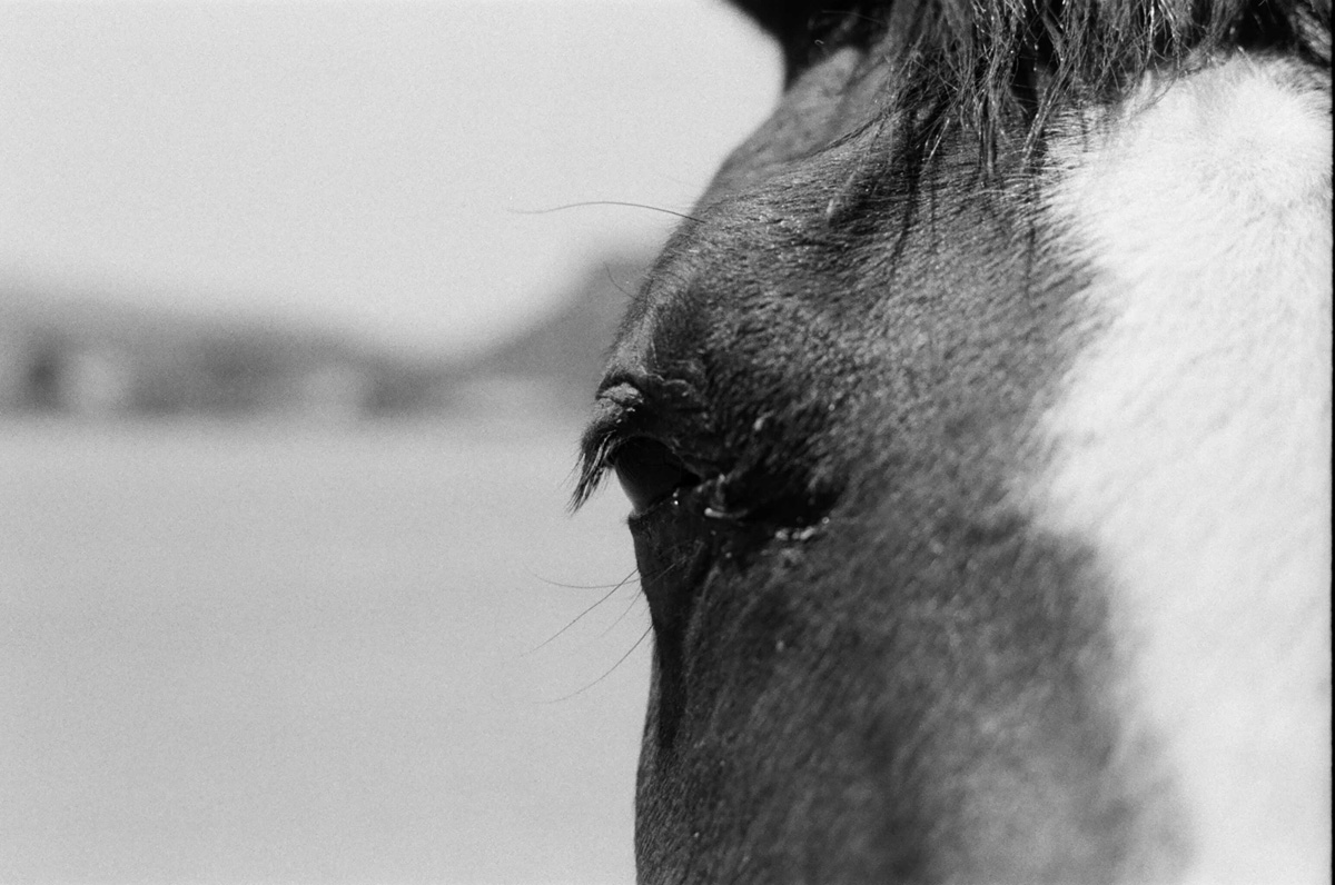 ©roeg_cohen_Texas_horse_colt_mag-8.jpg