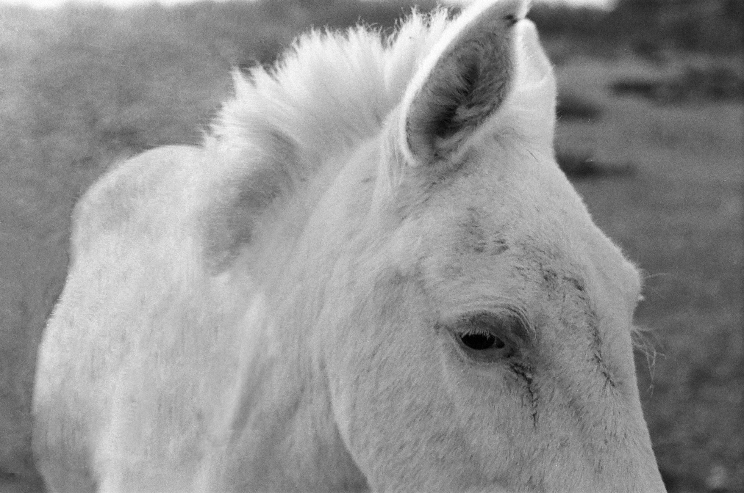 ©roeg_cohen_Texas_horse_colt_mag-1.jpg