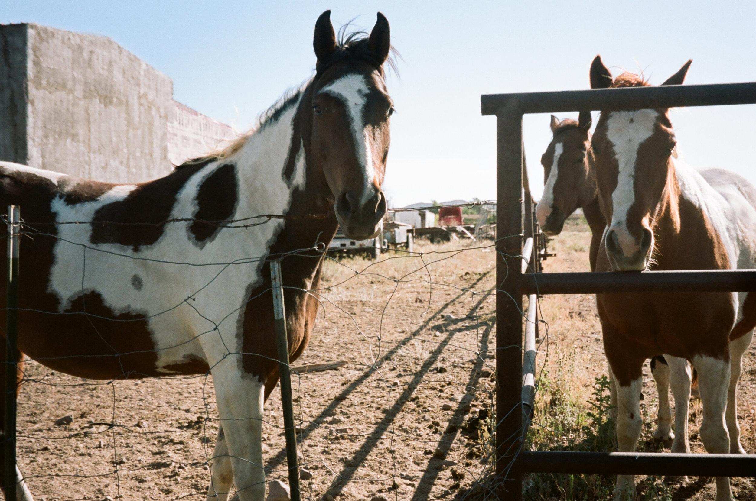 Alpine_Texas_paint_horse-3.jpg
