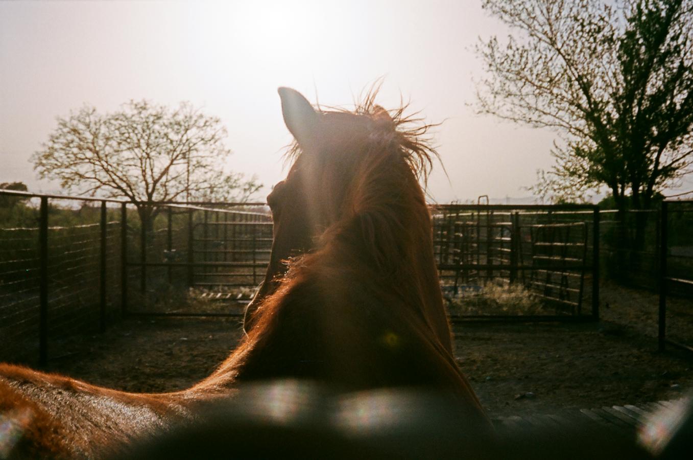 Texas_horse_.jpg