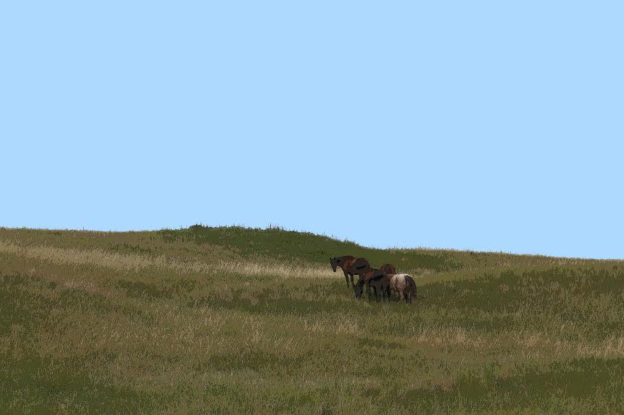 """Good Grass""Courtesy of Robert Brummett, Lewellen, NE. ©2009, taken on the Sutton Ranch near the border of Grant and Garden Counties"