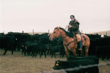 Jecca Ostrander on her quarter horse stallion