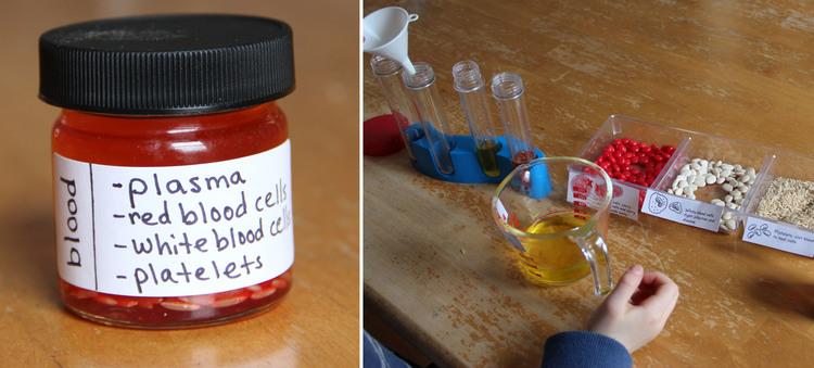 science+club+blood+model.jpg