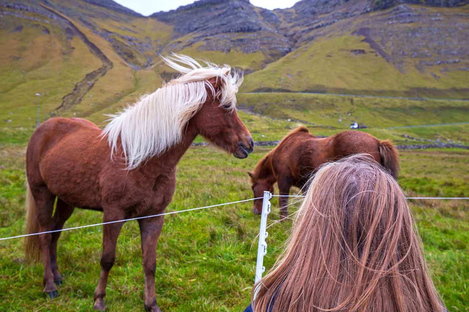 This Faroese horse was so BEAUTIFUL.