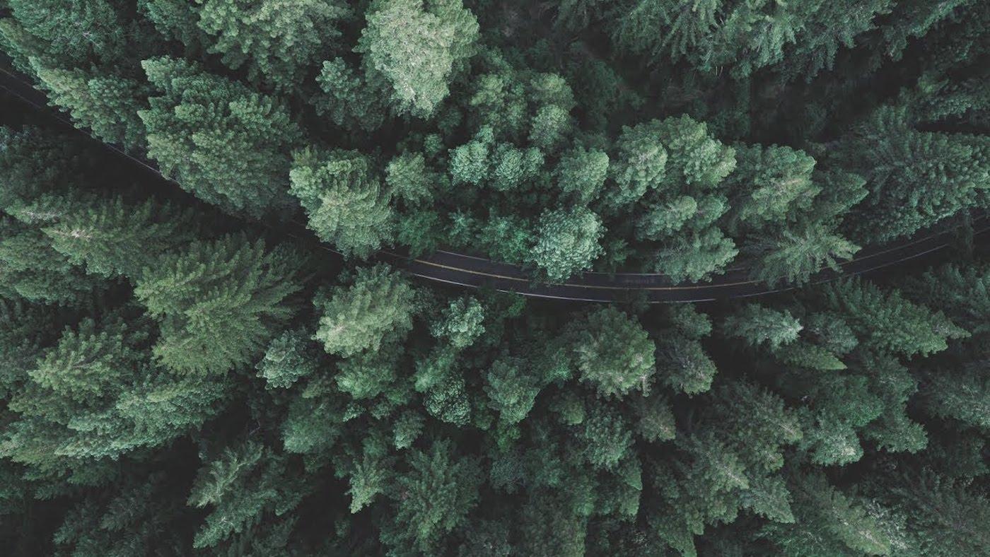 ROAD TREES (1).jpg