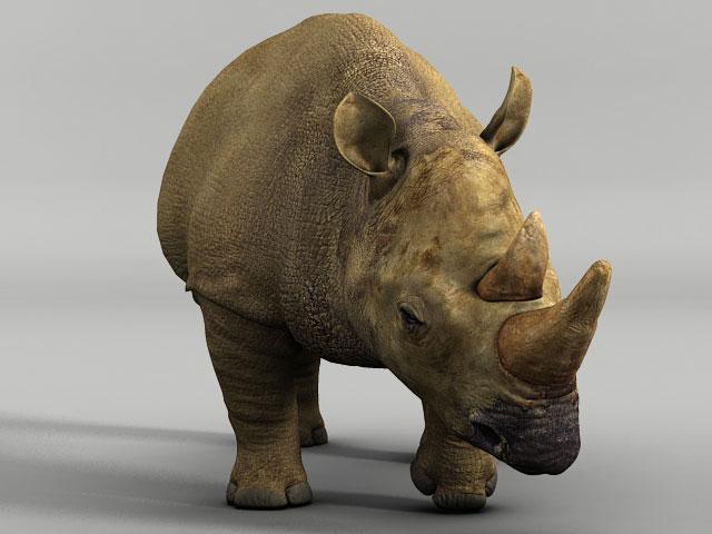 Rhino3.jpg