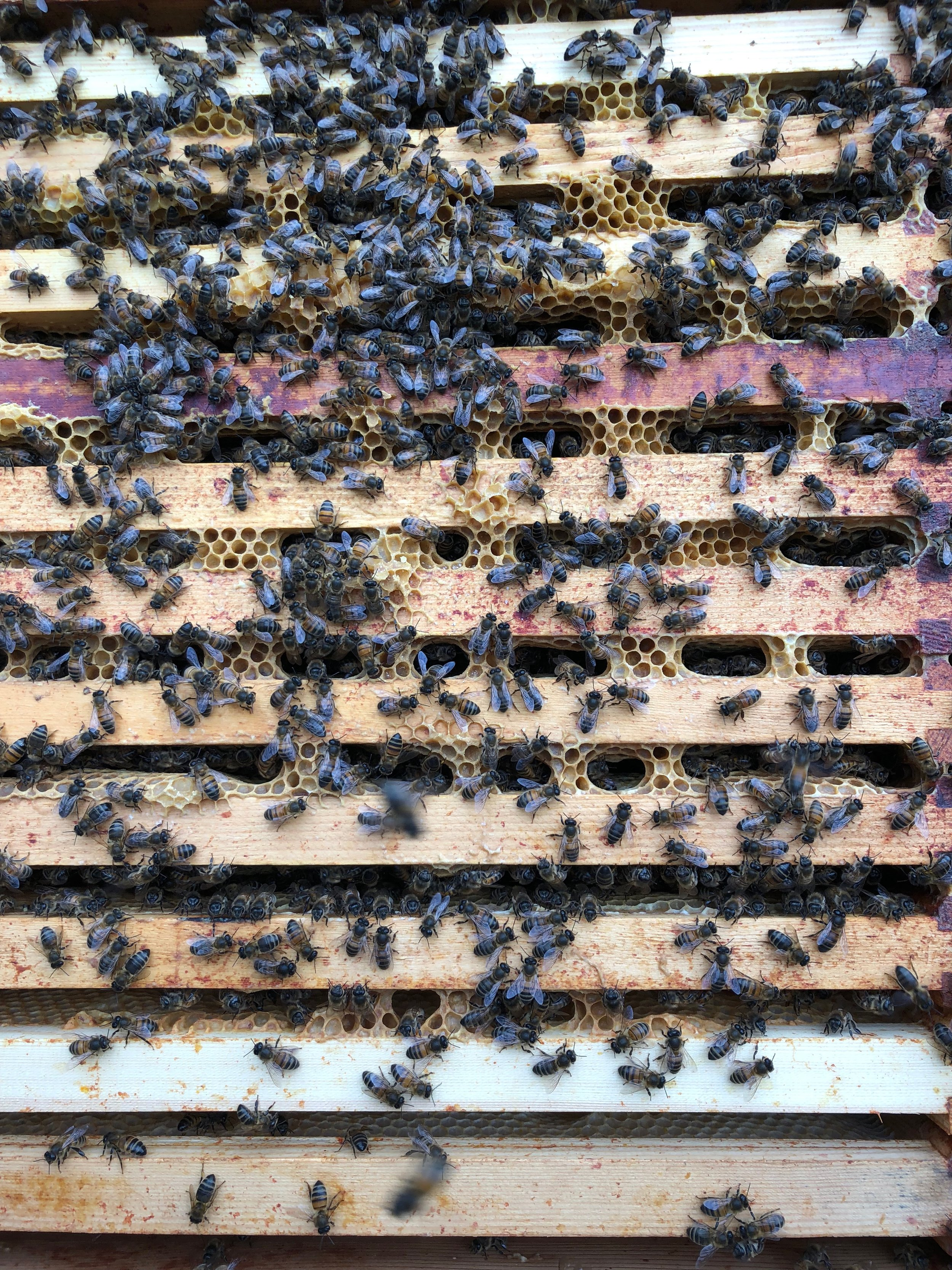 Nice covering of bees on the frames