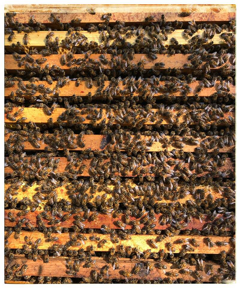 Top of the brood box humming with wonderful bees all busy with their work.