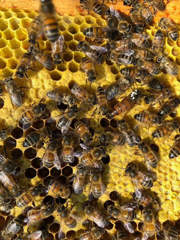 Spot the queen… clue is in the word 'spot'