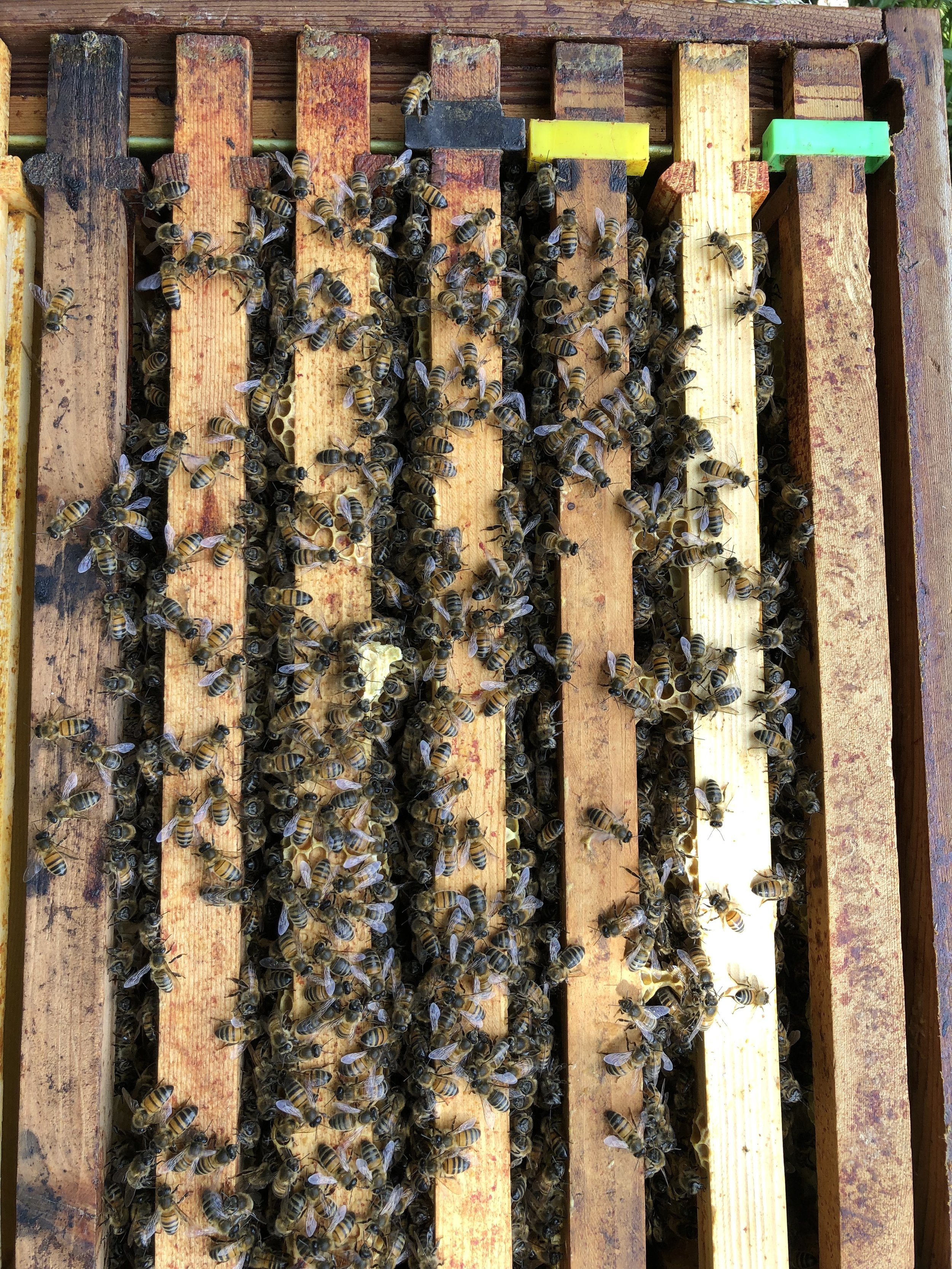 """""""Amelie's Hive""""  Six frames now covered.."""