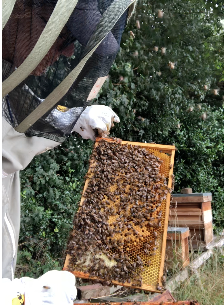 Look at all the bees coming at me!