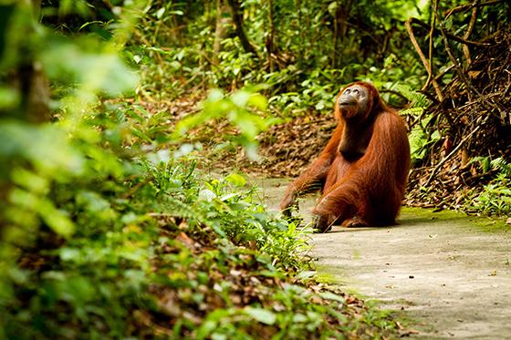 ID368549-Orangutan-who-loves-the-world-Brooke-Reynolds.jpg