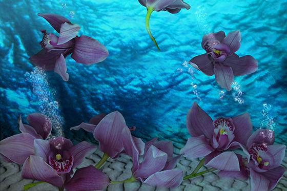 ID369676-Orchid_Venezuela-Andrea-Difiore.jpg