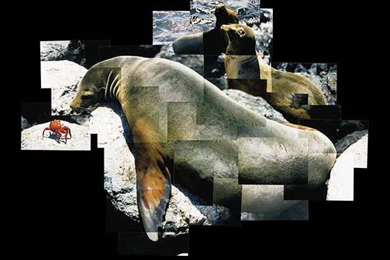 ID413640-Galapagos-Sea-Lion-and-Jenny-Dancer-Crab-Patrick-Walsh.jpg