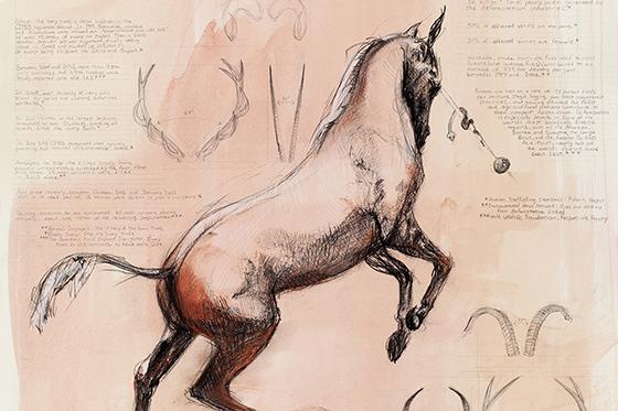 ID419844-Unicorn-Summary-of-Endengement-Kimberly-A-Heise.jpg