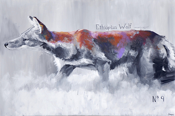 ID425068-The-Ethiopian-Wolf-Alison-Armstrong.jpg