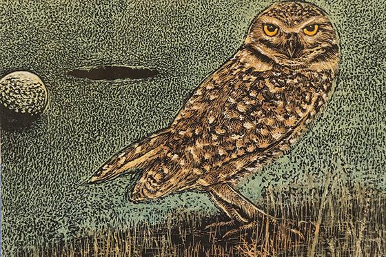ID426062-Burrowing-Owl-Engolfed-Suzanne-Michele-Chouteau.jpg