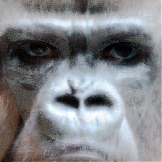 ID426199-Nagual-Gorillas-Spirit-Laurence-Dugas-Fermon_NEW1.jpg