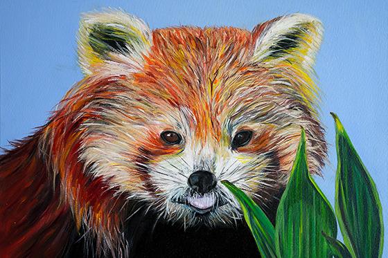 ID426272-Red-Panda-Silvana-A-Silvestre.jpg
