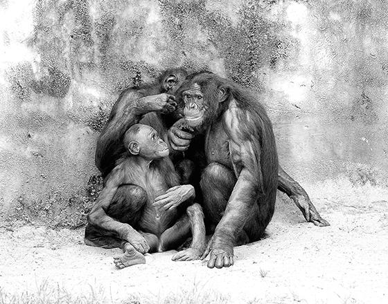 ID426407-Bonobo-Family-Black-white-Gail-Finck.jpg