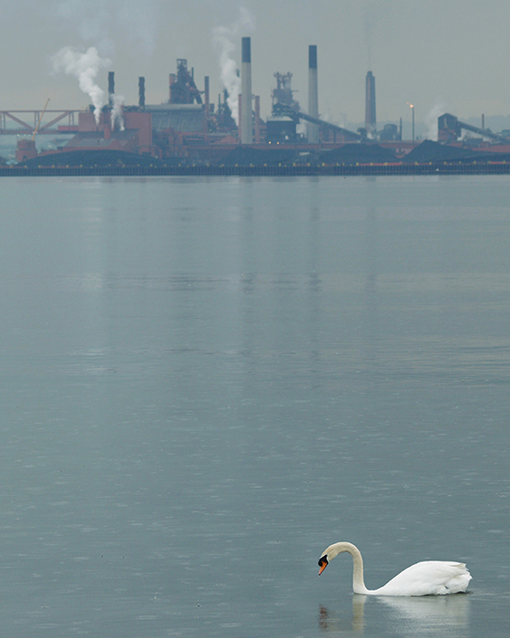 ID426416-Lonely-Swan-Peter-J-Figura_NEW.jpg