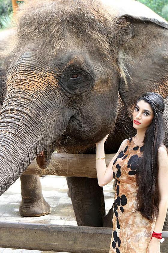 ID426481-Elephantasia-Gabby-Wild.jpg