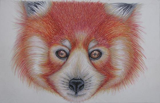 ID475342-Window-into-a-Red-Pandas-Soul-Aspen-Smith.jpg