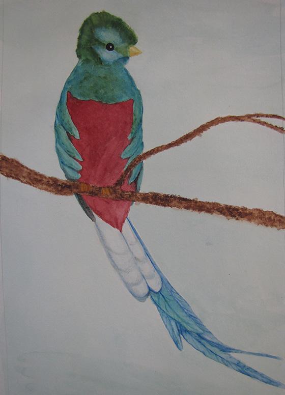 WEB_YA_ID475318-Resplendent-Quetzal-Megan-Martin.jpg