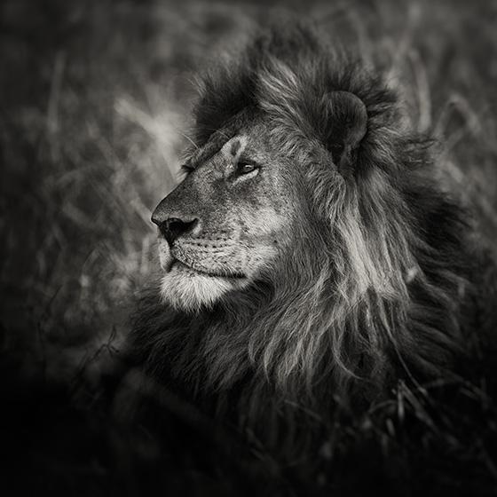 WEB_P_ID475474-Serengeti-nomad-Pekka-Jarventaus-copy.jpg