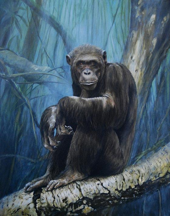 WEB_FA_ID511908-Keeper-Of-The-Congo-Rob-Dreyer.jpg
