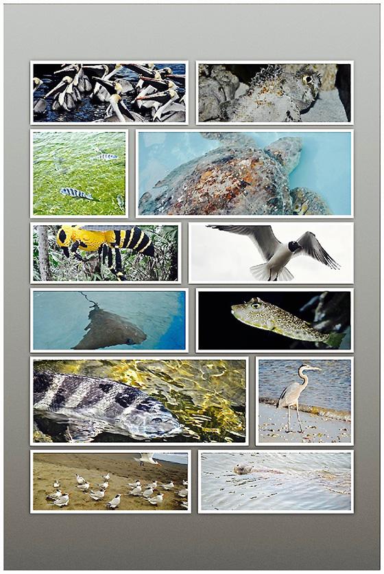 WEB_P_ID520159-Natures-Wonders-in-Florida-Howard-Greenberg.jpg