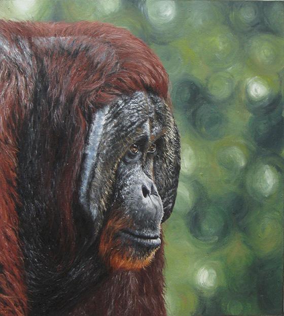 WEB_FA_ID520411-Orangutan-Sarah-Smith.jpg