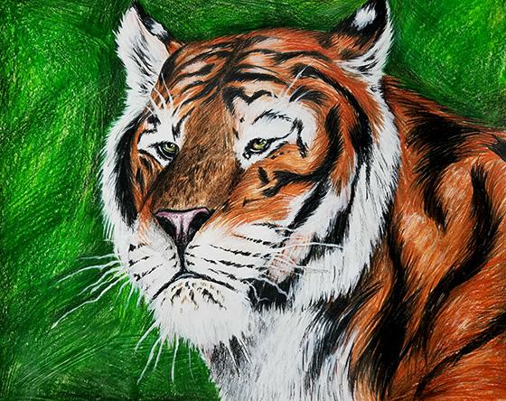 WEB_YA_ID520408-Bengal-Tiger-Lisa-Baita.jpg