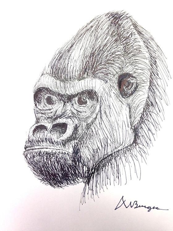 WEB_YA_ID520444-Endangered-Ape-Deneece-Ham.jpg