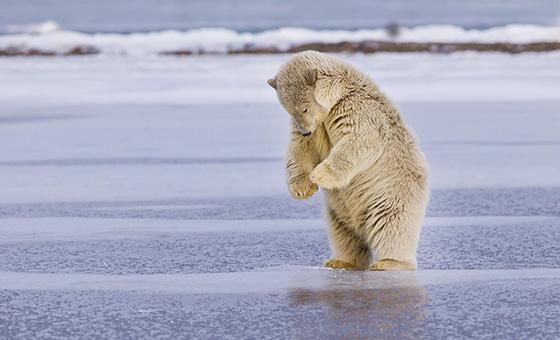 WEB_P_ID520545-In-the-Land-of-Teddy-Bears-Prelena-Soma-Owen.jpg