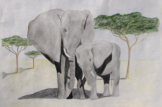 WEB_YA_ID520888-An-Elephants-Love-Isaac-Robertshaw.jpg