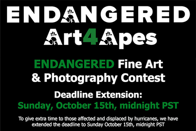 BLOG_A4A_Contest_Extension.jpg
