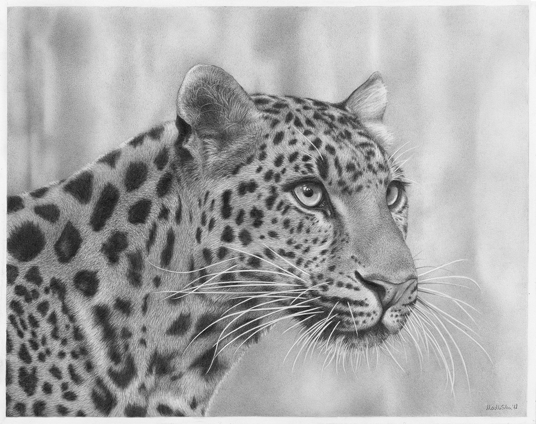 Amur Leopard © 2018 Madli Silm   All Rights Reserved