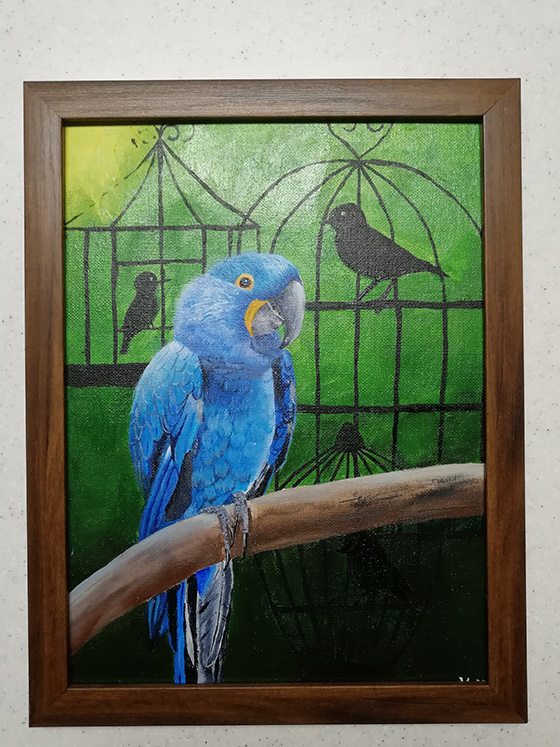 Hyacinth Macaw © 2018 Victoria Midkiff   All Rights Reserved