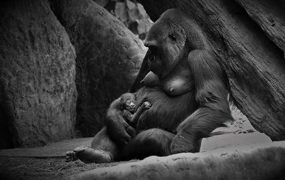 A Mother's Love © 2018 Gavin Minard   All Rights Reserved