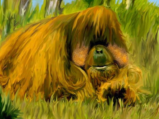 Orangutan © 2018 Charlene Biesele   All Rights Reserved