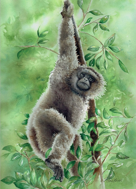 Gibbon © 2018 Lois Friel | All Rights Reserved