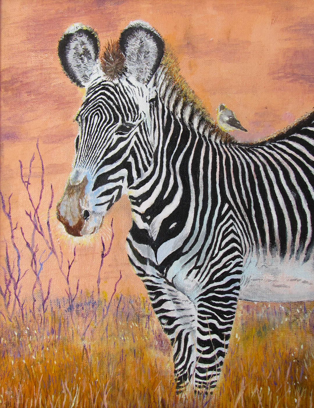 Grevy's Zebra © 2018 Cyrus Li | All Rights Reserved