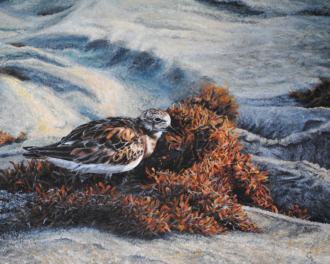 Sandpiper © 2018 Carol-Ann Salley | All Rights Reserved