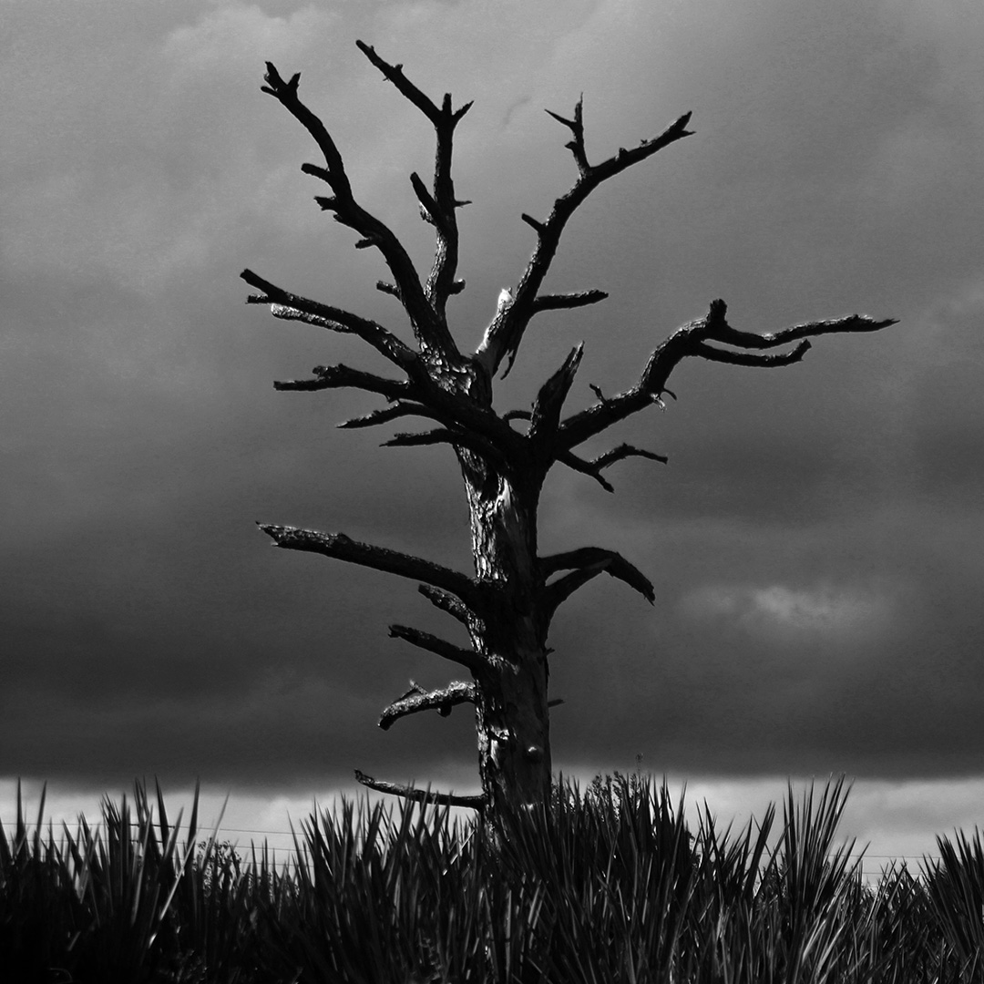 Tree © 2019 Kieran Whalley | All Rights Reserved