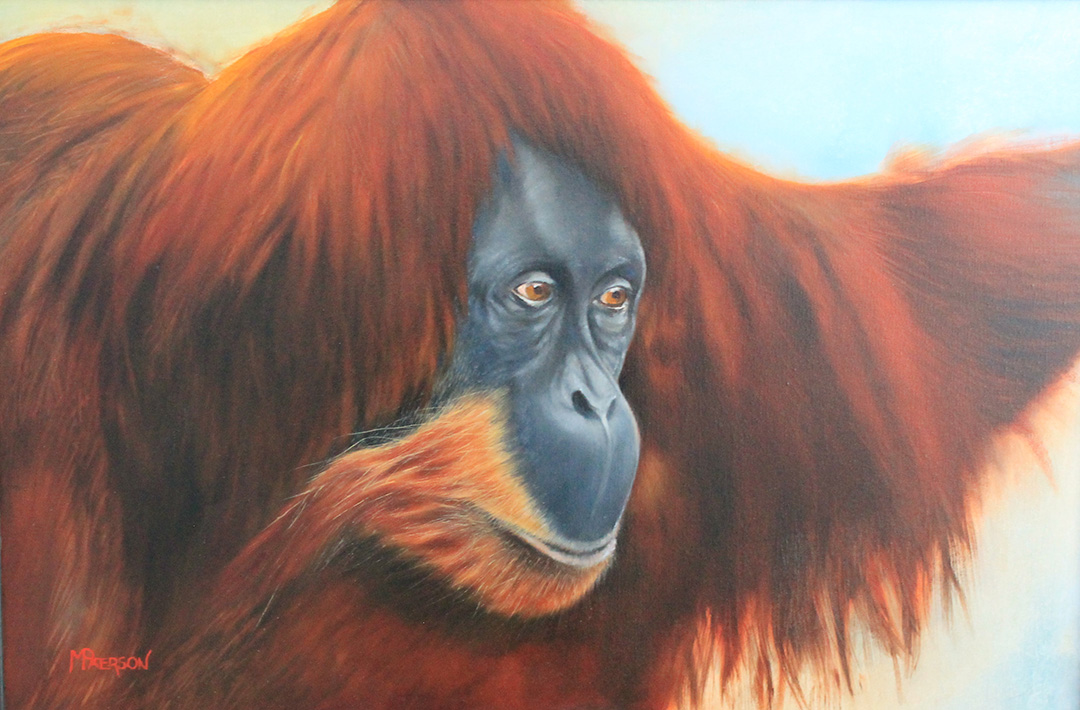Orangutan © 2019 Melisa Paterson | All Rights Reserved