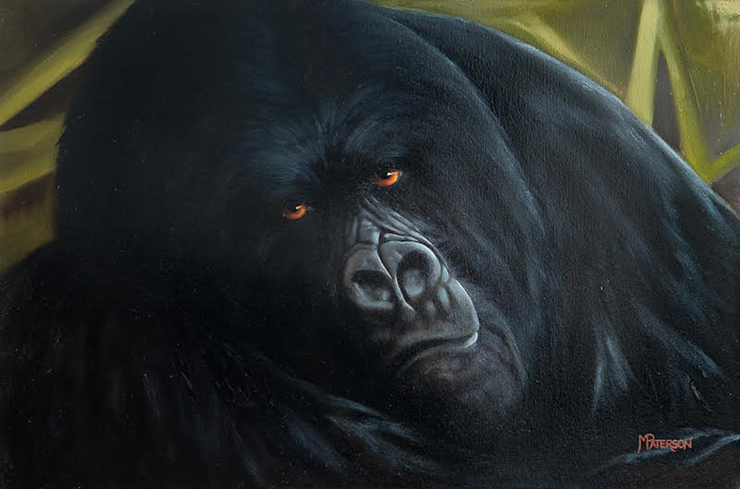 Mountain Gorilla © 2019 Melisa Paterson   All Rights Reserved