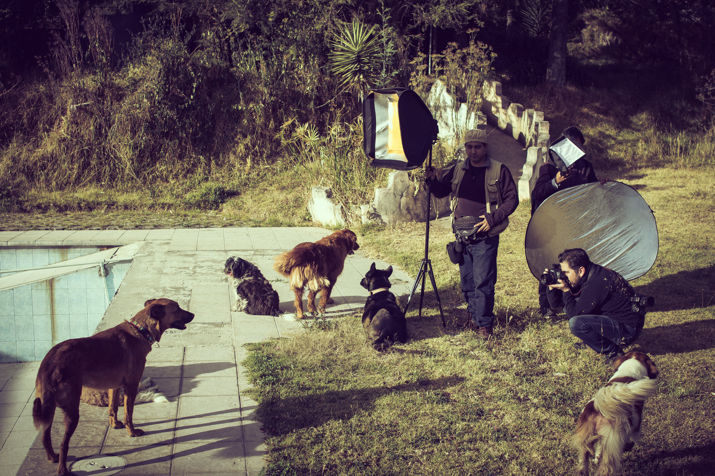 August 2018 - Luis Mariño Carrera and his photography team at the shelter AULLA preparing material for a fundraising campaign to support this local Ecuadorian shelter.