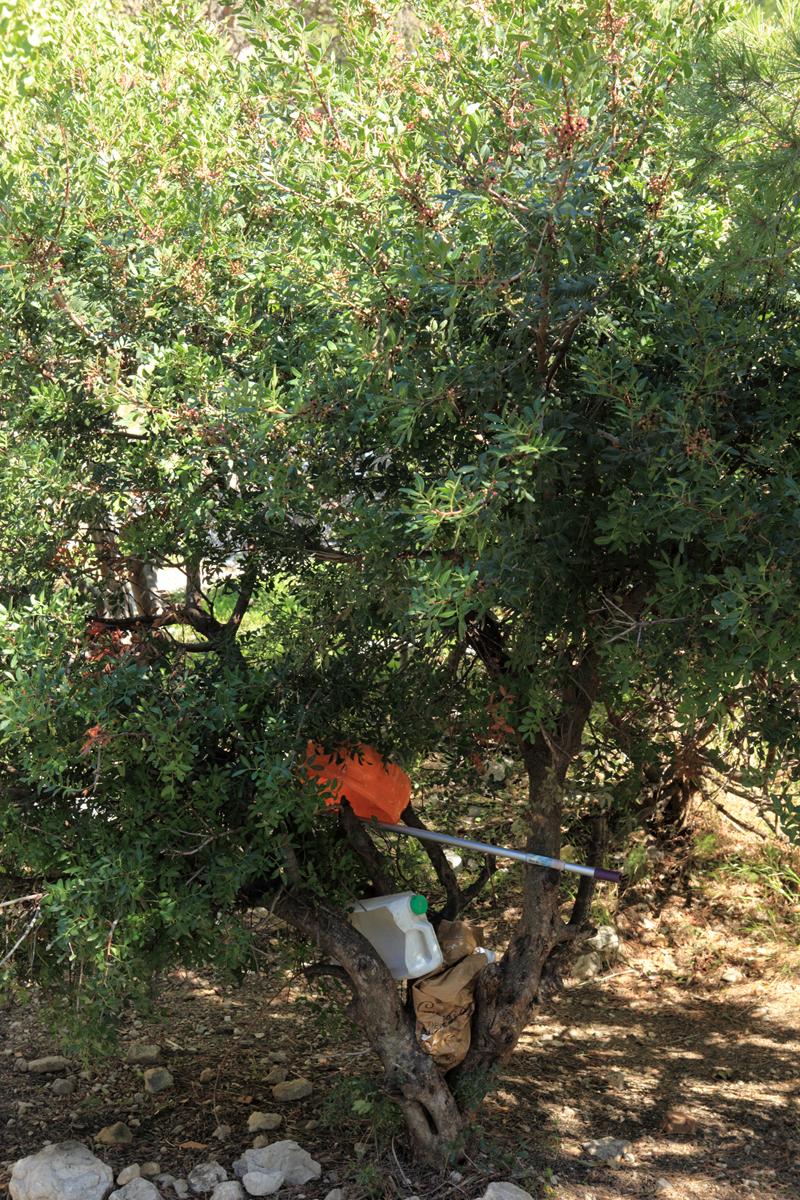 janot-la-descente3-2012.jpg