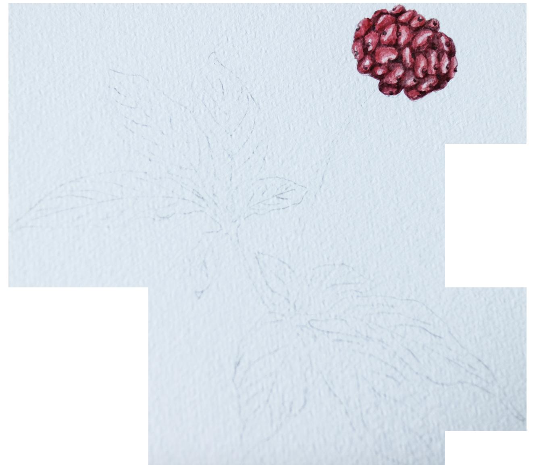 Ginseng in Buy Nootropics for earth grown ingredients